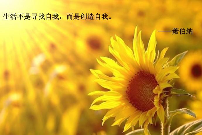 敏友档案:石峰